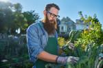 bearded man with glasses tending to urban garden